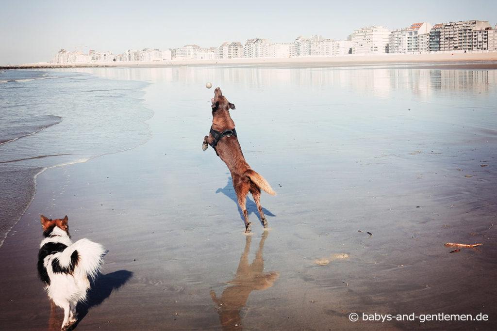 Urlaub mit Hund in Knokke-Heist