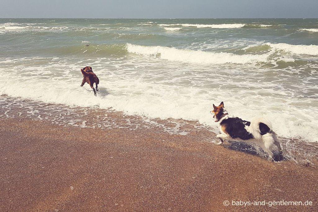 Urlaub mit Hund: In Knokke-Heist sehr empfehlenswert